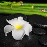 Zdroju położenie białego kwiatu frangipani, zen bazalta kamienie Zdjęcia Stock