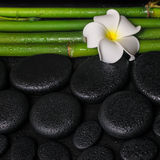 Zdroju położenie zen bazaltowi kamienie, białego kwiatu frangipani Zdjęcia Royalty Free