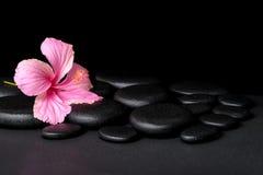 Zdroju pojęcie różowy poślubnika kwiat na zen bazalta kamieniu z dro Zdjęcie Royalty Free