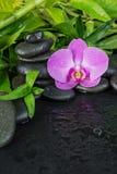 Zdroju pojęcie z zen kamieniami, storczykowym kwiatem i bambusem, zdjęcie royalty free