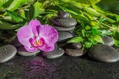Zdroju pojęcie z zen kamieniami, storczykowym kwiatem i bambusem, obrazy royalty free