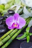 Zdroju pojęcie z zen kamieniami, storczykowym kwiatem i bambusem, obraz stock