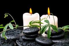 Zdroju pojęcie zielona gałązka z tendril passionflower z kroplami Fotografia Royalty Free