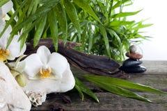 Zdroju pojęcia dekoracja z orchideami palmowymi Fotografia Stock