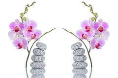 Zdroju skład masaży kamienie i dwa motyliej orchidei z odbiciem odizolowywającym na białym tle Obrazy Royalty Free