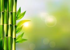 Zdroju tło z bambusem Zdjęcie Royalty Free