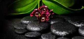 Zdroju wciąż życie piękny głęboki - purpurowy storczykowy kwiat, phalaenop zdjęcia stock