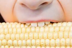 Zdrowa łasowanie koloru żółtego kukurudza obrazy stock