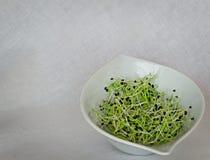 zdrowa żywność Surowe cebul flance zdjęcia royalty free