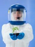 Zdrowa organicznie roślina Zdjęcia Royalty Free