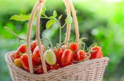 Zdrowa owoc z świeżymi Czerwonymi Słodkimi pomidorami Obraz Royalty Free
