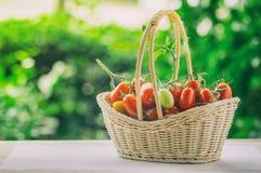 Zdrowa owoc z świeżymi Czerwonymi Słodkimi pomidorami w bambusowym koszu Zdjęcia Stock