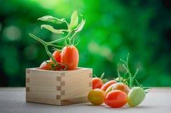 Zdrowa owoc z świeżymi Czerwonymi Słodkimi pomidorami w pudełkowatym drewnie Zdjęcie Royalty Free
