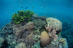 Zdrowa rafa koralowa 1 Obraz Royalty Free