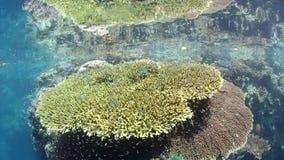 Zdrowa rafa koralowa i Kolorowa ryba w Raja Ampat zbiory wideo