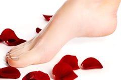 Zdrowe kobiet nogi biały odosobnione nogi Piękna kobieta le Obraz Stock