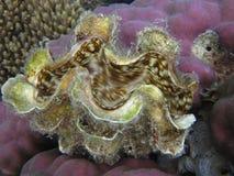 Zdrowe rafy koralowa obraz royalty free