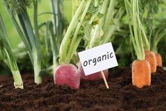 Zdrowego łasowania organicznie warzywa w ogródzie zdjęcia stock