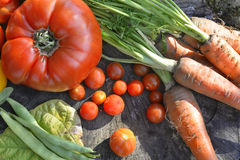 Zdrowi warzywa zdjęcie royalty free