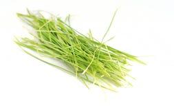 Zdrowi wheatgrass Zdjęcie Royalty Free