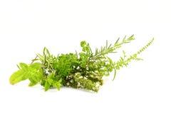Zdrowi ziele Fotografia Stock