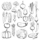 Zdrowotni rolni warzyw nakreślenia ustawiający Zdjęcia Stock