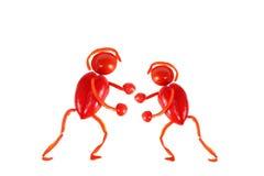 Zdrowy łasowanie. Dwa małego śmiesznego boksera Obrazy Royalty Free