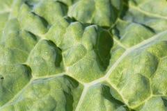 Zdrowy świeży zielonej kapusty liścia tekstury żyłkowania motywu wzoru tło Fotografia Stock