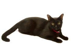 Zdrowy czarnego kota lying on the beach Fotografia Stock