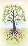 zdrowy drzewo ilustracja wektor