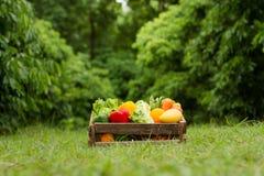Zdrowy jedzenie z świeżym organicznie warzywem na zielonym środowiska tle zdjęcia stock