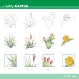 Zdrowy kaktus Obraz Stock