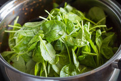Zdrowy kucharstwo w garnku z warzywami i spinanch Fotografia Royalty Free
