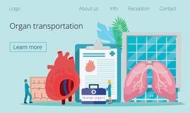 Zdrowy Ludzki Organowy dawca ilustracja wektor