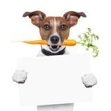Zdrowy pies z marchewką Fotografia Stock