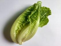 Zdrowy Sałata zdjęcie stock