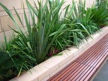 zdrowy siedzenia ławki ogrodu zdjęcia royalty free