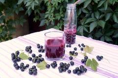 Zdrowy smoothie od jagody blackcurrant witaminy napój, lato deserów pojęcie Obraz Stock