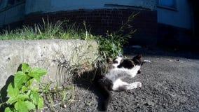 Zdziczały bezpański koci się bawić się na miasto ulicie zbiory wideo