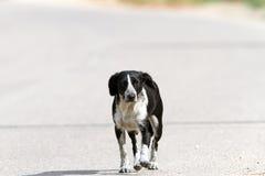 Zdziczały psi odprowadzenie na ulicie obraz stock