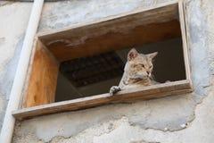 Zdziczały uliczny kot Zdjęcia Stock