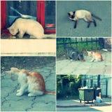 Zdziczali koty żyją outdoors i potrzebują adopcja wizerunku kolaż tonującego set Obraz Royalty Free