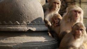 Zdziwiona małpa Obraz Royalty Free