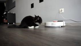 Zdziwiony kot siedzi blisko mądrze mechaniczny próżniowy czystego w sypialni zbiory wideo