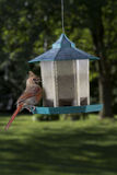 Zdziwiony mały ptak zdjęcie royalty free