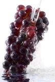 ze świeżych winogron Zdjęcie Stock