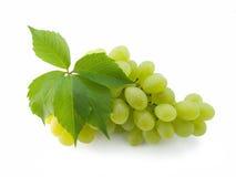 ze świeżych winogron wiązek Obraz Stock