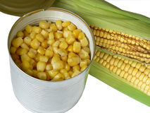 Zea mays Royalty Free Stock Photography
