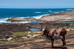 Zebà ¹ på kust i södra Madagascar arkivbilder