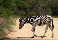 Zebraüberfahrt Lizenzfreies Stockfoto